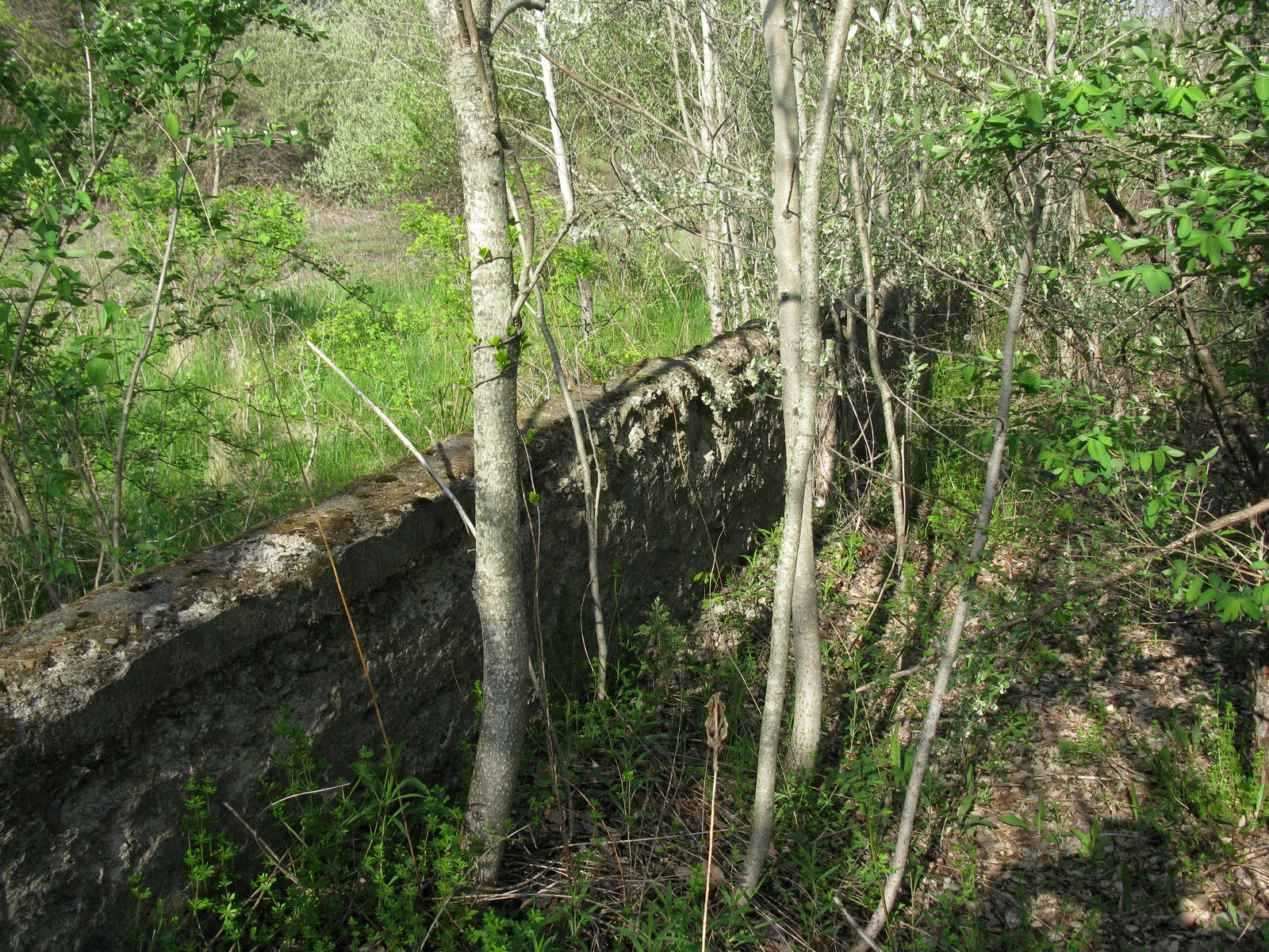 Greendell-Concrete-Wall.JPG