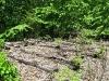 Greendell-Siding-Roadbed-2.JPG