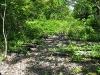 Greendell-Siding-Roadbed.JPG