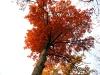 Large Oak 2.jpg