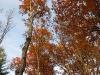 Ridge Road Wallpack Foliage.jpg