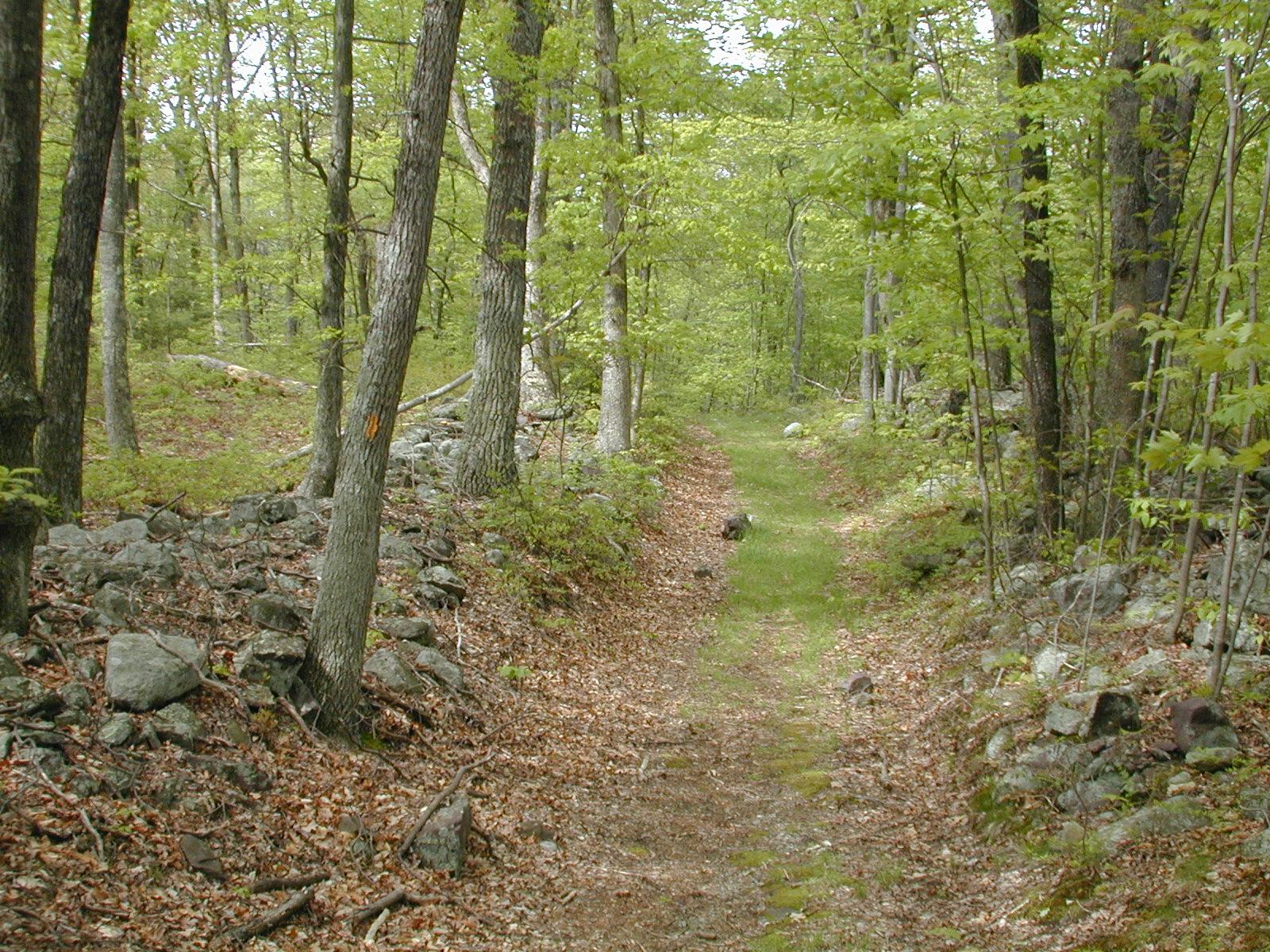 Orchard Trail near Millbrook