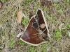 Stoneware fragment