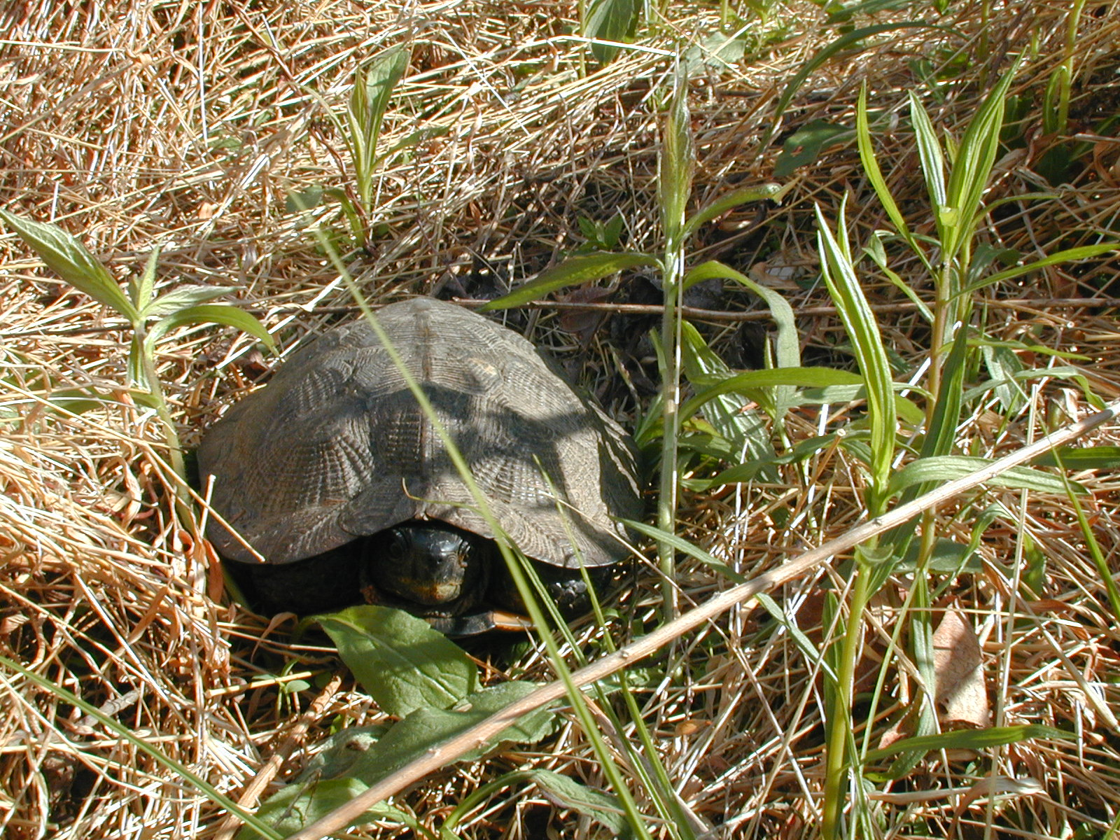 The turtle out in the sun for a picture